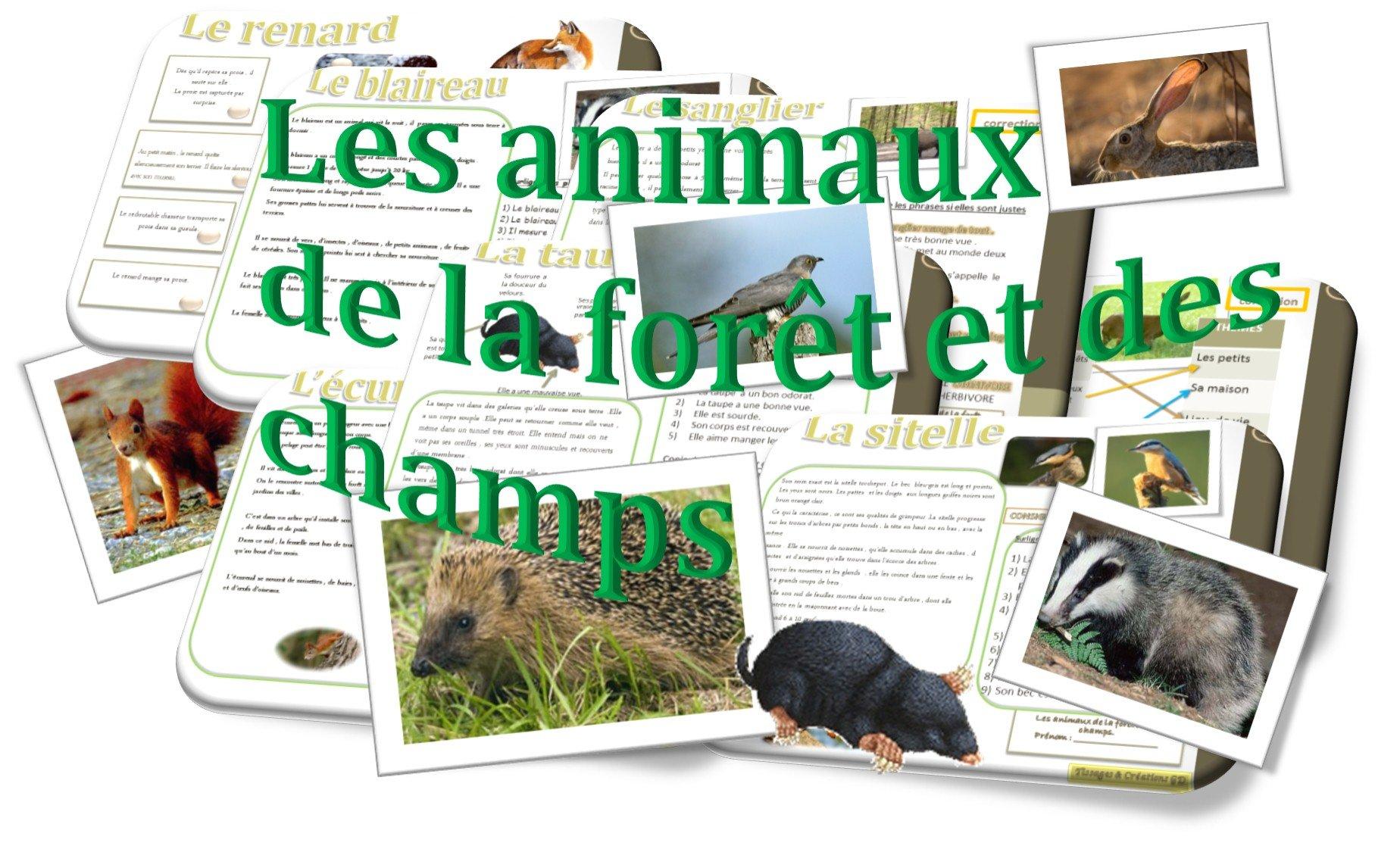 Correction Activite La Romanisation Sur Le Site Paris Ville Antique