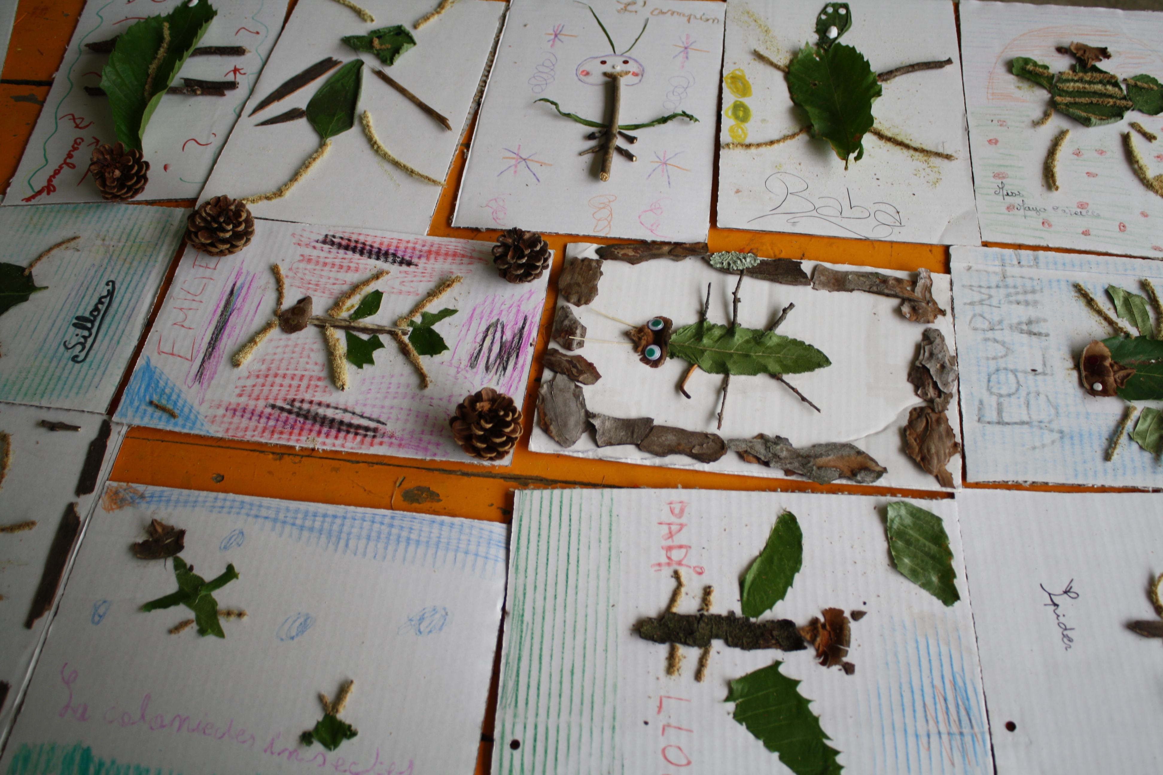 Activites Nature Les Vegetaux Recreatisse