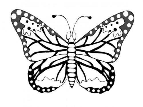 Imagepapillon